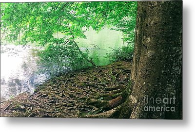 Roots On The River Metal Print