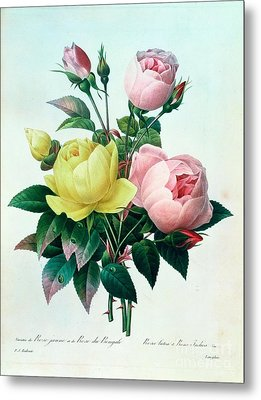 Rosa Lutea And Rosa Indica Metal Print by Pierre Joseph Redoute