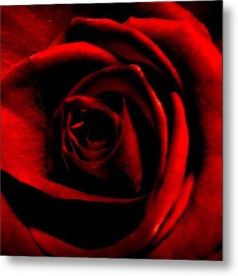 Rose Metal Print by CML Brown