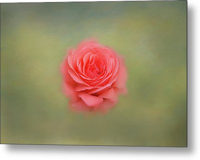Metal Print featuring the photograph Rose Impressions by Kim Hojnacki