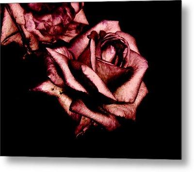 Rose Metal Print by Mohammed Nasir