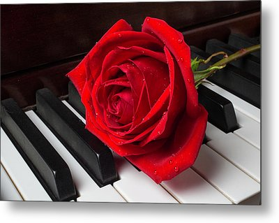 Rose With Dew On Piano Metal Print