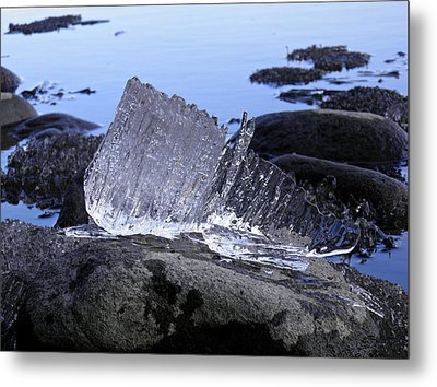 Metal Print featuring the photograph Royal Ice Creature by Sami Tiainen