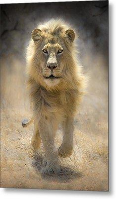Running Lion Metal Print by Stu  Porter