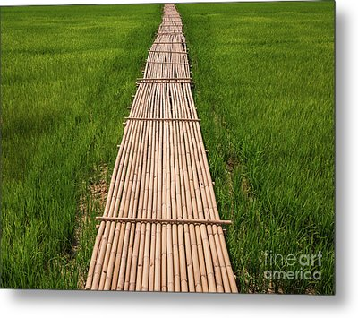 Rural Green Rice Fields And Bamboo Bridge. Metal Print by Tosporn Preede