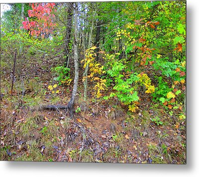Rural Tyler County Landscape Metal Print by Terry  Wiley