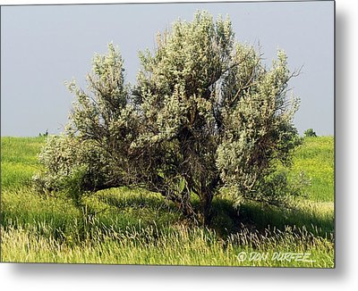 Metal Print featuring the photograph Russian Olive On The Prairie by Don Durfee