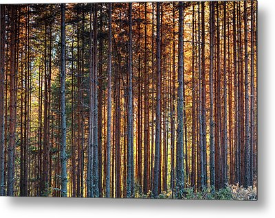 Rusy Forest Metal Print by Evgeni Dinev