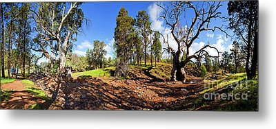 Metal Print featuring the photograph Sacred Canyon, Flinders Ranges by Bill Robinson