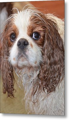 Sad After Bath Metal Print