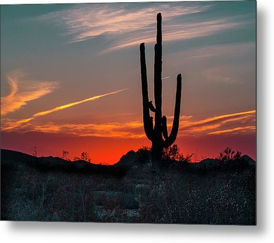 Sagauro Sunset Metal Print by Penny Lisowski