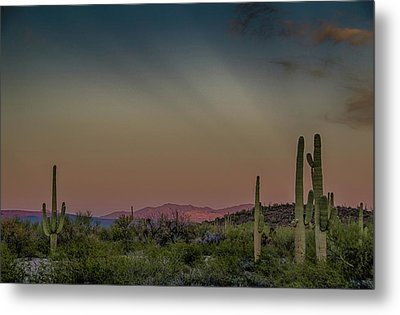 Saguaros Salute Rays Rising Metal Print