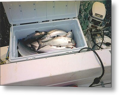 Salmon Catch Of Day Metal Print by Judyann Matthews