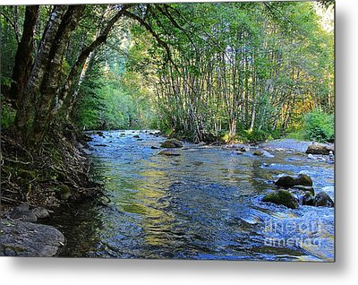 Salmon Creek Majestic  Metal Print by Tim Rice
