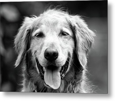 Sam Smiling Metal Print