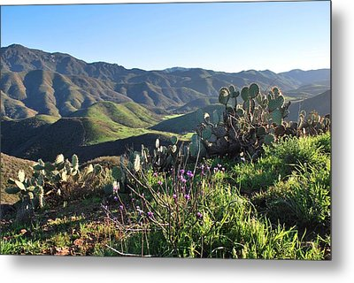 Metal Print featuring the photograph Santa Monica Mountains - Cactus Hillside View by Matt Harang