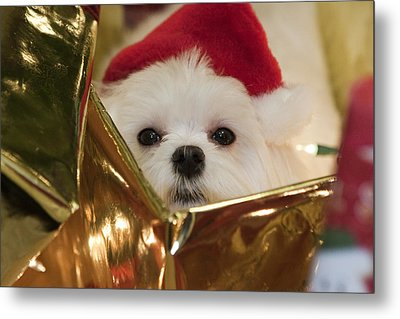 Metal Print featuring the photograph Santa Paws by Leslie Leda