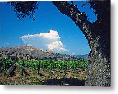 Santa Ynez Vineyard View Metal Print by Kathy Yates