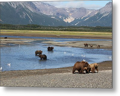 Scenic Bears Metal Print by David Wilkinson