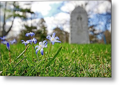 Scilla In Cemetery Metal Print by Charline Xia