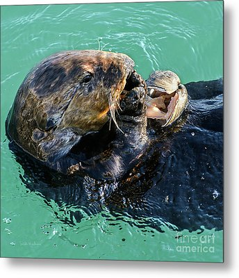 Sea Otter Munching On A Clam Metal Print