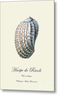 Sea Shell Metal Print by Patruschka Hetterschij