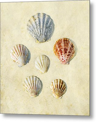 Sea Shells Metal Print by Paul Grand