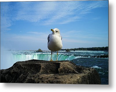 Seagull Checking Out The Photographers Metal Print by Lawrence Christopher