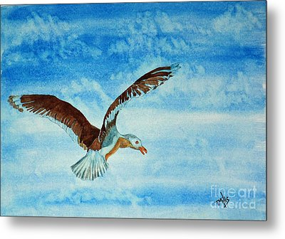 Seagull In Flight Metal Print by Terri Mills