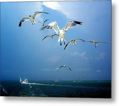 Seagulls  Metal Print by Brittany H