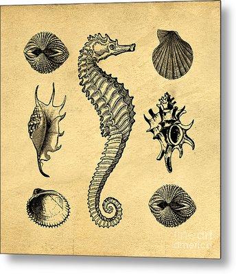 Seashells Vintage Metal Print
