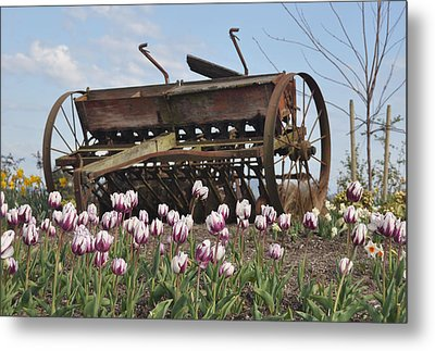 Seed Drill Tulips Metal Print by Brent Easley