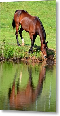 Seeing My Own Reflection Metal Print by Maria Urso