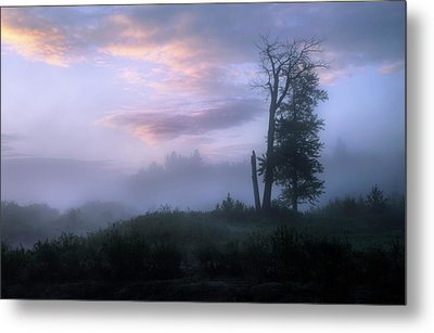 Metal Print featuring the photograph Sentinels In The Valley by Dan Jurak