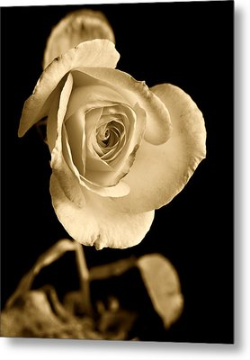 Sepia Antique Rose Metal Print by M K  Miller