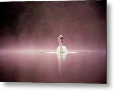 Serenity - Swan On A Foggy Sunset Metal Print