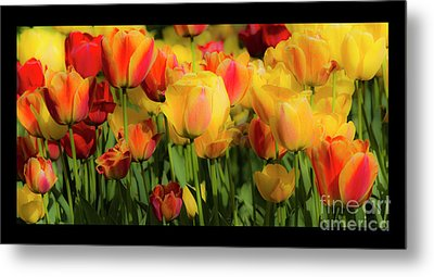 Metal Print featuring the photograph Seriously Spring - Bordered by Wendy Wilton