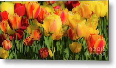 Metal Print featuring the photograph Seriously Spring by Wendy Wilton