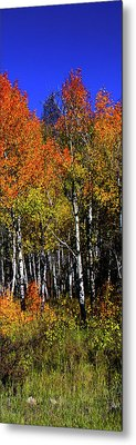 Set 54 - Image 4 Of 5 - 10 Inch W Metal Print by Shane Bechler
