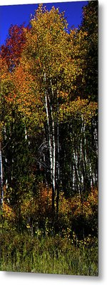 Set 54 - Image 5 Of 5 - 10 Inch W Metal Print by Shane Bechler