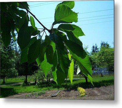 Shades Of Green 2 Metal Print by Ken Day