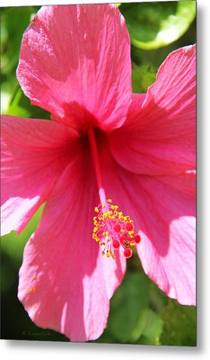 Shades Of Pink - Hibiscus Metal Print by Kerri Ligatich