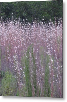 Shades Of Summer Grass Metal Print