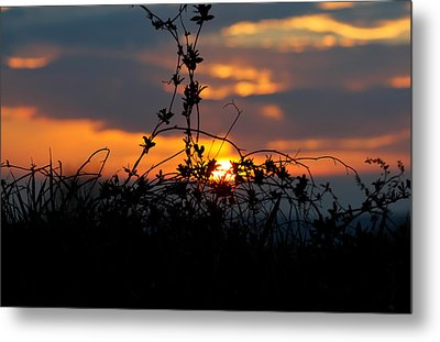 Shades Of Sun Metal Print