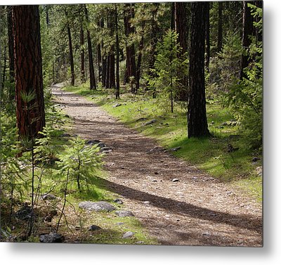 Metal Print featuring the photograph Shadows On The Path by Ben Upham III