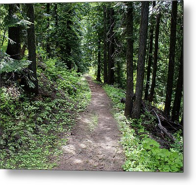 Metal Print featuring the photograph Shady Grove Path by Ben Upham III