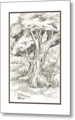 Shady Tree Metal Print by Ruth Renshaw