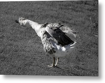 Metal Print featuring the photograph Shake It Out by Phyllis Denton