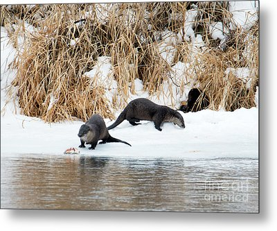 Sharing A Meal Metal Print