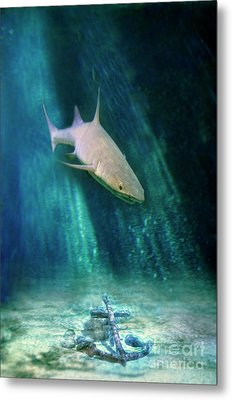 Shark And Anchor Metal Print by Jill Battaglia